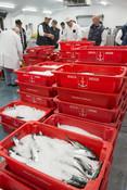 Newyln Fish Market