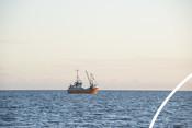 Cornish Fishery Hake and Newlyn Photos