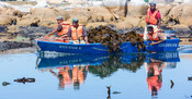 South African kelp harvesters in boat