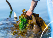 South African Kelp Harvesting Photographs
