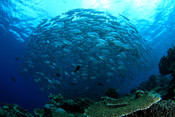 Fond marin - Semaine de la Pêche Responsable 2019