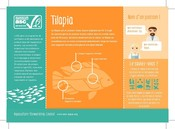 Tilapia Poissons espèces aquaculture - Fish species aquaculture