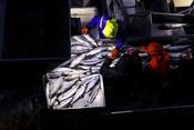 MSC AIR salmon - sorting chum