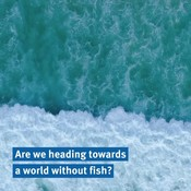 Are we heading towards a world without fish?