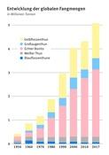 Tabelle mit der Entwicklung der globalen Thunfischfangmengen in Millionen Tonnen