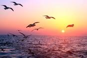 Sea gulls at sea
