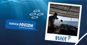 BULOT - Question Poisson - Visuels Réseaux sociaux