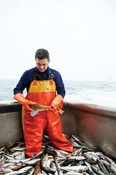 Jan Kramer, Dutch fisherman heros - Species: mackerel and gunard