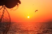 Sun setting set seagull gull horizon