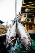 MIFV RMI EEZ Longline Yellowfin and Bigeye Tuna Fishery (Marshall Islands)