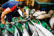 MIFV RMI EEZ Longline Yellowfin and Bigeye Tuna Fishery (Marshall Islands)