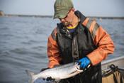 Kevin Taylor, fisherman holding salmon | Wild Alaska Salmon Fishery Visit, Bristol Bay