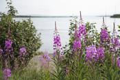 Alaska scenery | Wild Alaska Salmon Fishery Visit, Bristol Bay