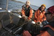 Fishermen pulling salmon out of net | Wild Alaska Salmon Fishery Visit, Bristol Bay
