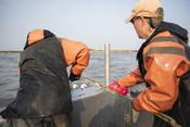Fishermen pulling net in | Wild Alaska Salmon Fishery Visit, Bristol Bay