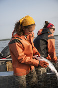 Emily Taylor pulling fish out of net | Wild Alaska Salmon Fishery Visit, Bristol Bay