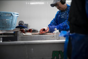 Processing, salmon being filleted | Wild Alaska Salmon Fishery Visit, Bristol Bay
