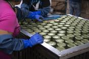 Processing, canned salmon | Wild Alaska Salmon Fishery Visit, Bristol Bay
