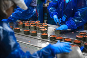 Processing, salmon being canned | Wild Alaska Salmon Fishery Visit, Bristol Bay