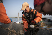 Wild Alaska Salmon Fishery Visit, Bristol Bay