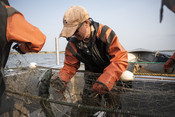 Fisherman pulling fish out of net   Wild Alaska Salmon Fishery Visit, Bristol Bay