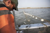 Fisherman looking at net | Wild Alaska Salmon Fishery Visit, Bristol Bay