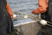 Close-up of fishermen with net | Wild Alaska Salmon Fishery Visit, Bristol Bay
