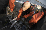 Fisherman taking salmon out of net | Wild Alaska Salmon Fishery Visit, Bristol Bay