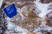 Plaice on ice - fishmonger - fishcounter