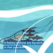 Bycatch explained in 1 minute