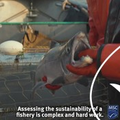 How to Find Sustainable Seafood_For Partners