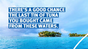 Tuna statement cards