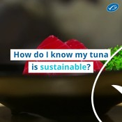 Wochit: Sustainable tuna