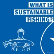 MSC 101 Informational Graphics - Sustainable Fishing