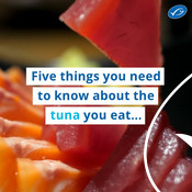 Wochit: 5 Tuna facts