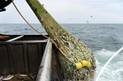 Trawling methods - looking into sea