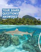 Shark Interview - Instagram