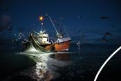 Mayflower fishing