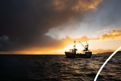 Serene-Dawn and fishers