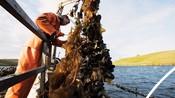 Mussel fishermen