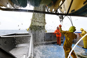 North sea landing trawl trawling net