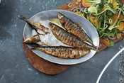 Sardines in a pan