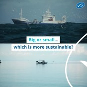 Wochit: Big VS Small - which is more sustainable?