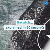 Wochit: Bycatch explained in 60 seconds