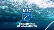 Hero Video PHASE 1 National Seafood Month Partner Resources