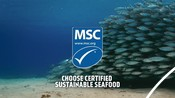 Hero Video PHASE 2 National Seafood Month Partner Resources