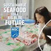 Discovery Ad Graphic (shopping for seafood) - Seafood Month Campaign