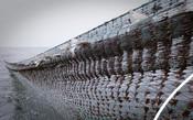 Photos of Polish Baltic flatfish fishery