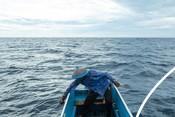 Fish for Good Fisheries - Tuna Indonesia
