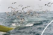 Maldives seafront birds chasing boat RGB